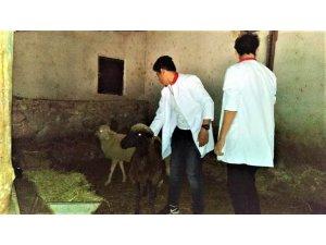 Öğrenciler hayvan sağlığını sahada öğreniyorlar