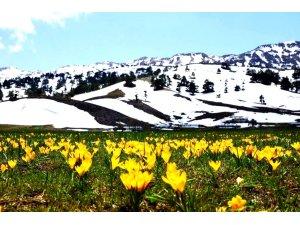 Toros dağlarında renk cümbüşü