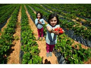 2020 Yılı Tarımsal Destekleme Başvuruları Başladı