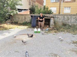 Mardin güvercin ırkını Seydişehir'de yetiştiriyor
