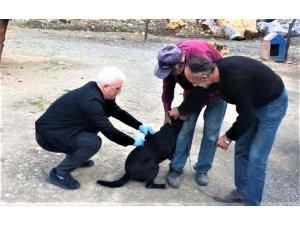 Barınaktaki köpeklere kuduz aşısı yapıldı